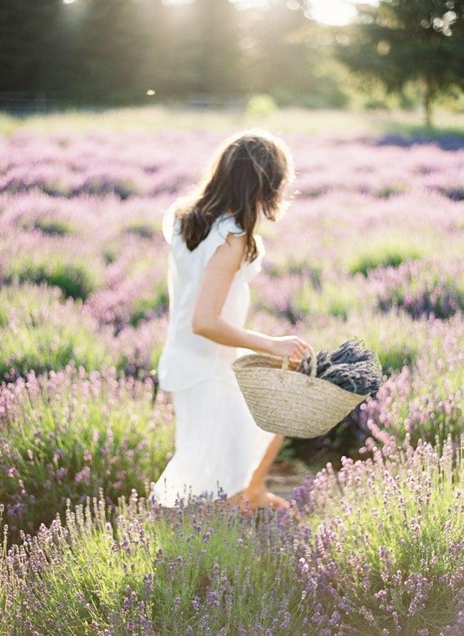 lavendershoot10