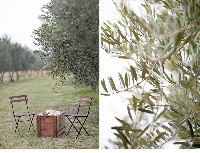 olive grove hochzeit olivenhain 0041