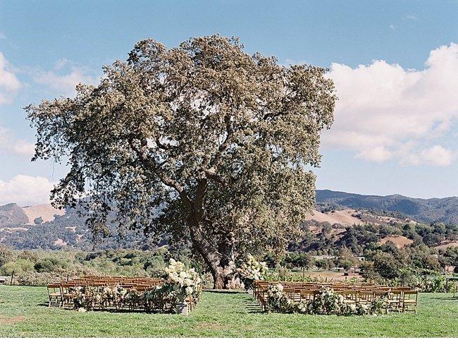 sierra chase weinberge sunstone winery 0015