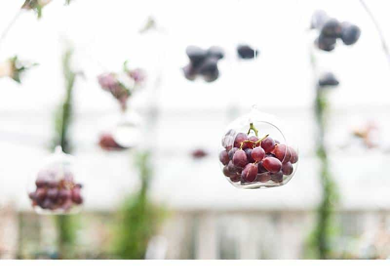 botanicals berries blumenshoot 0019