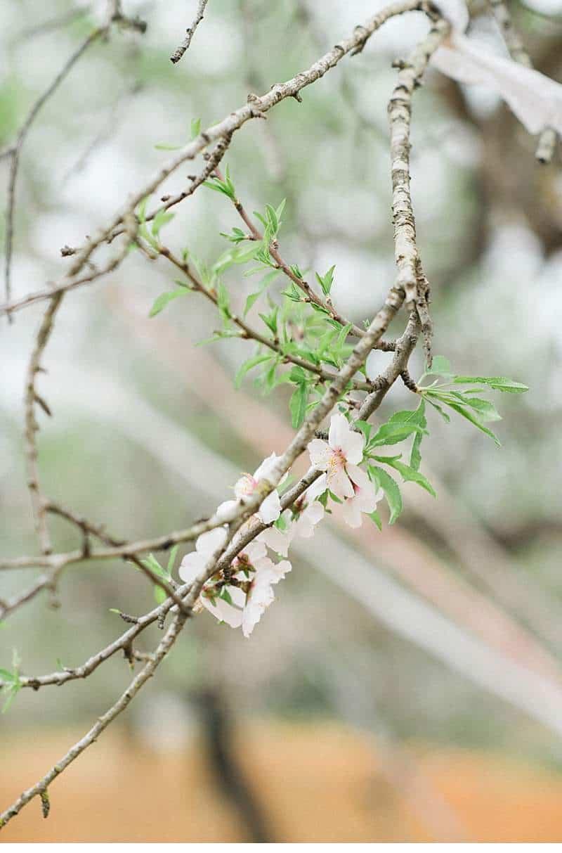 almond-blossom-bride-ibiza_0009