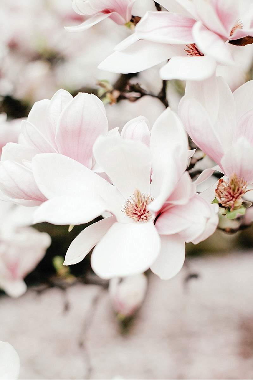 brautinspirationen-magnolienblueten_0022